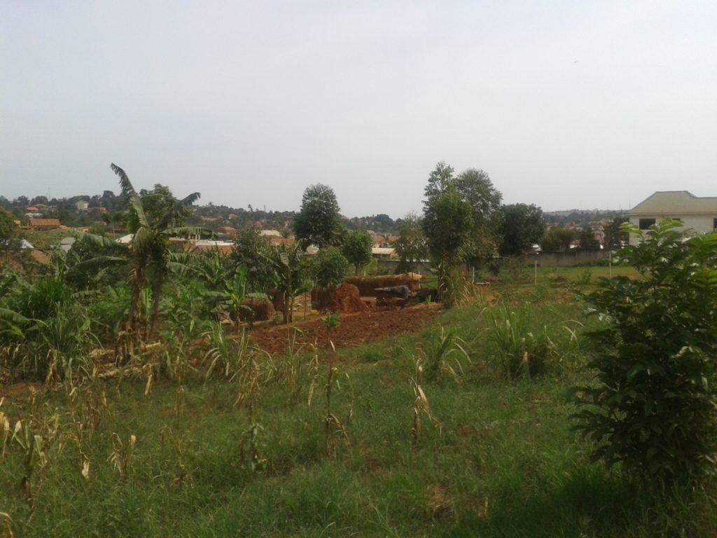 4 Acres Of Milo Land, Entebbe