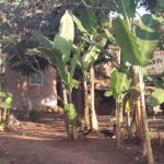 Land For Sale, Bunga